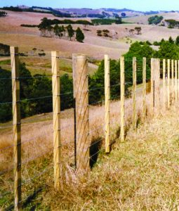 Fence Battens