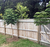 Fence Palings with Trees